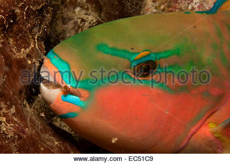 Mucus Stock Photos & Mucus Stock Images.