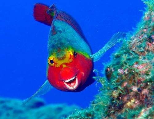 1000+ images about Ryan's Marine Life on Pinterest.