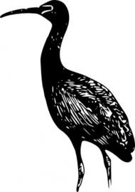 Scarlet Ibis Clip Art Download 48 clip arts (Page 1).