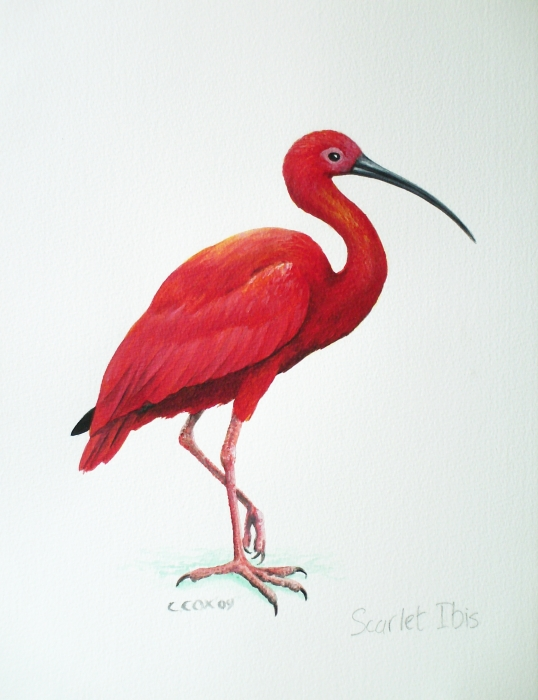 The Scarlet Ibis New on emaze.