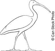 Ibis Illustrations and Clipart. 93 Ibis royalty free illustrations.