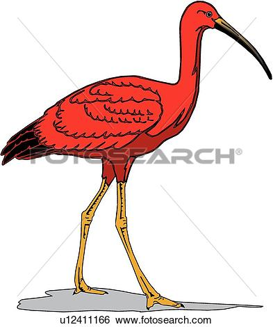 Clip Art of Scarlet Ibis u12411166.