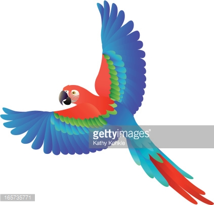 Showing post & media for The scarlet macaw cartoon.