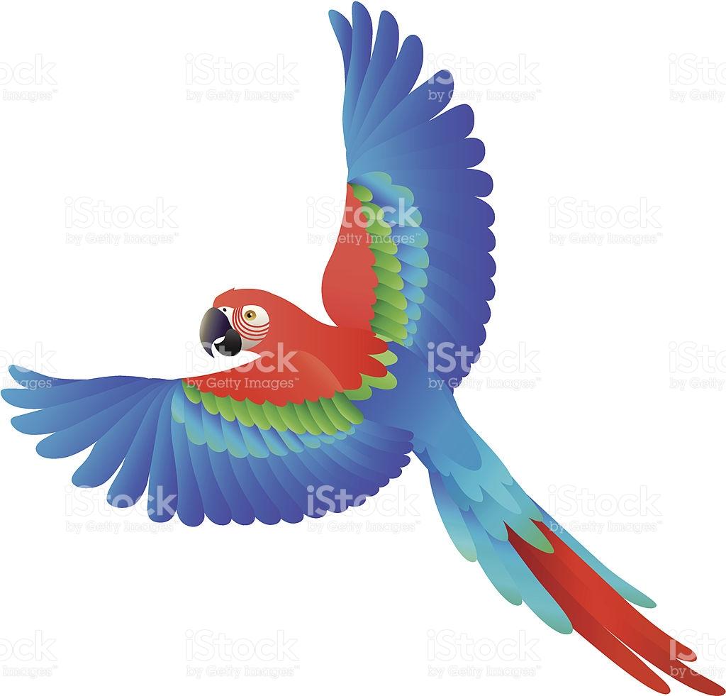 Flying Scarlet Macaw stock vector art 165735771.