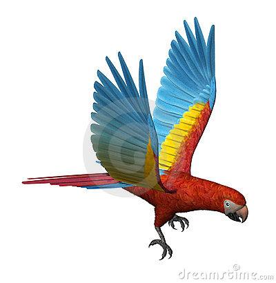 Macaw Stock Illustrations.