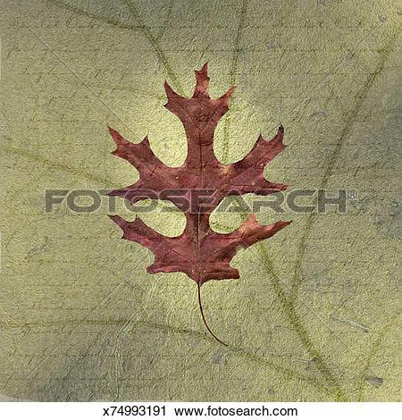 Clipart of Scarlet Oak Leaf on Descriptive Background x74993191.