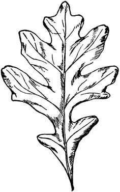 Types of Oak Leaves.