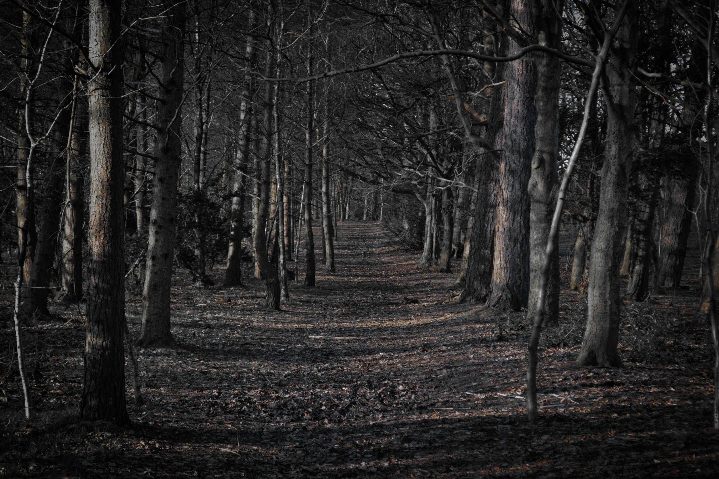 66+ Creepy Forest Wallpapers on WallpaperPlay.