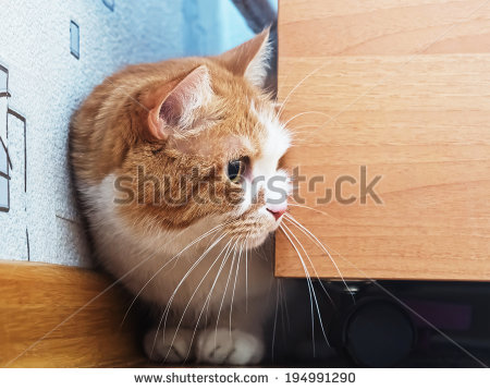 Scared Cat Stock Images, Royalty.