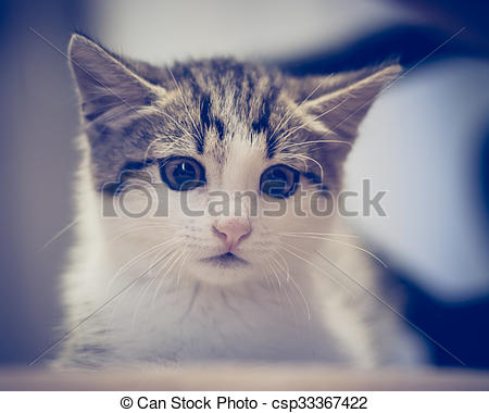 Stock Photo of Scared kitten hiding at home..