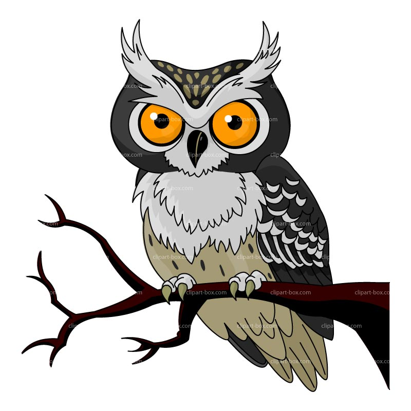 Owl On Tree Branch Drawing.