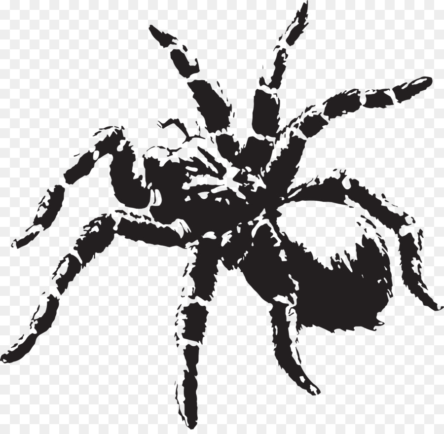 Spiders Cartoon clipart.