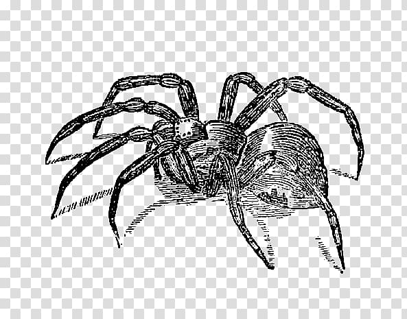 Spider , Scary Spider transparent background PNG clipart.