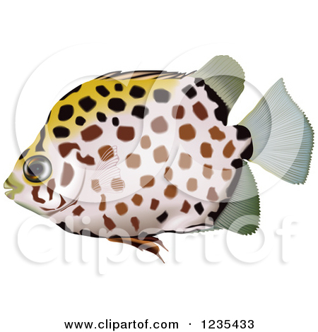 Clipart of a Spotted Scat Fish.