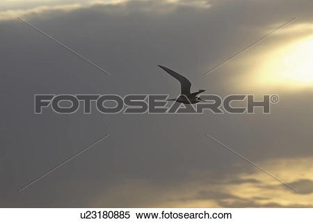 Stock Image of canada, tern, saskatchewan, scenic, flight.