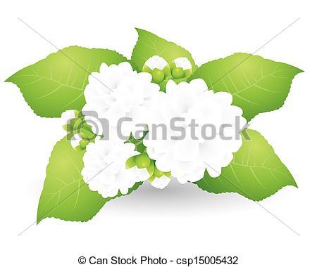 Vector Clipart of Beautiful Night Blooming Jasmine on White.
