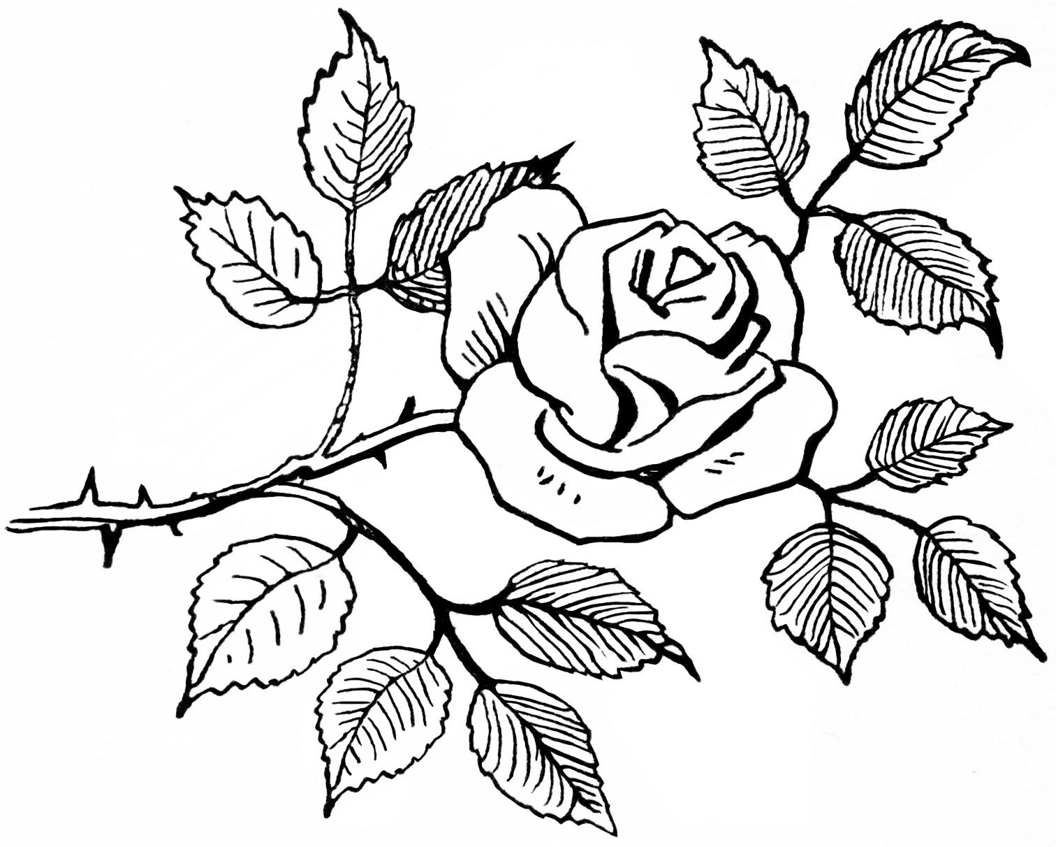 Rose sketch clipart.