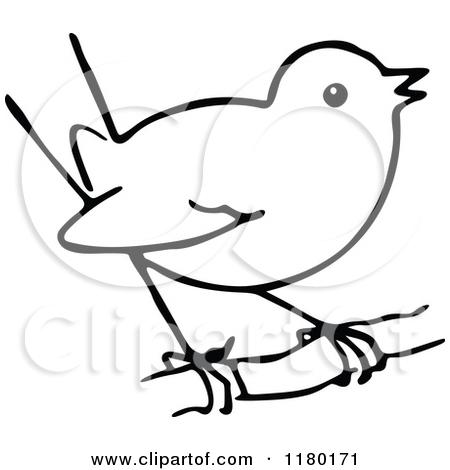 Bird Sketch Clipart.