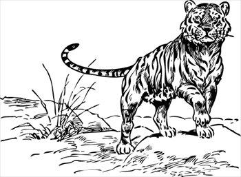Free tiger.
