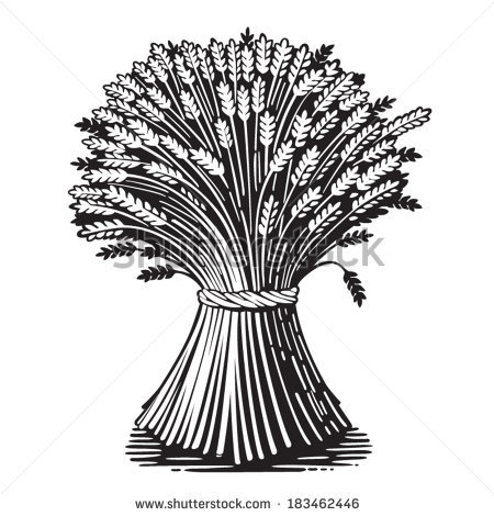 Sheaf Of Wheat Clipart.