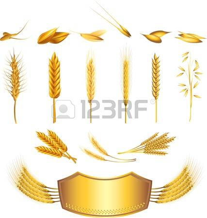 1,944 Sheaf Stock Vector Illustration And Royalty Free Sheaf Clipart.