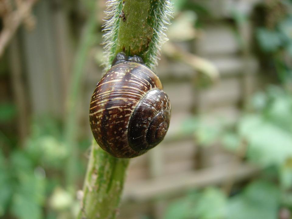 Free photo Arianta Arbustorum Schalenweichtiere Snail Shells.