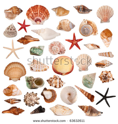 Shell art free stock photos download (2,955 Free stock photos) for.