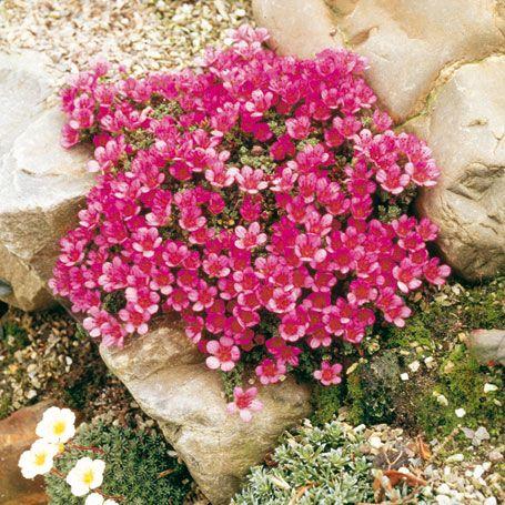 1000+ images about Garten on Pinterest.