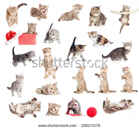 Cat baby cat young animal free stock photos download (7,486 Free.