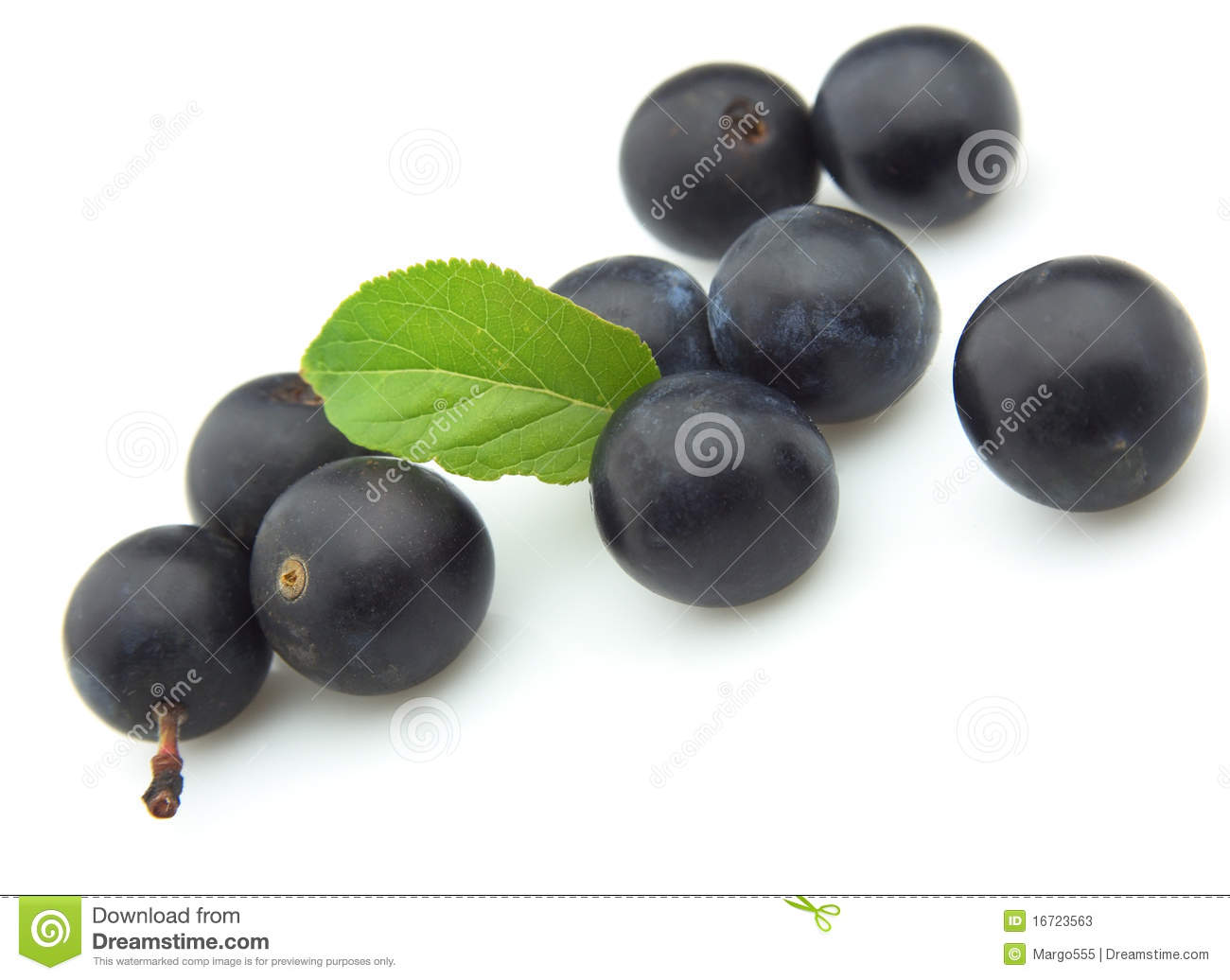 Ripe Sloe Stock Photos, Images, & Pictures.