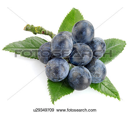Stock Photography of Sloe Gin u14229850.