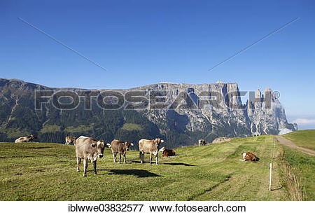 """Picture of """"Cows on a pasture, Schlern Massif or Sciliar Massif."""