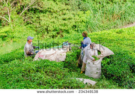 Young Farmer Plowing Farmland Conservative Way Stock Photo.