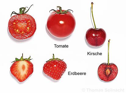 Mediendatenbank Biologie, Bau der Früchte.