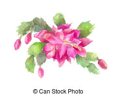 Schlumbergera Illustrations and Clipart. 18 Schlumbergera royalty.
