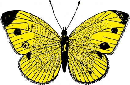 Gelbe Schmetterling.