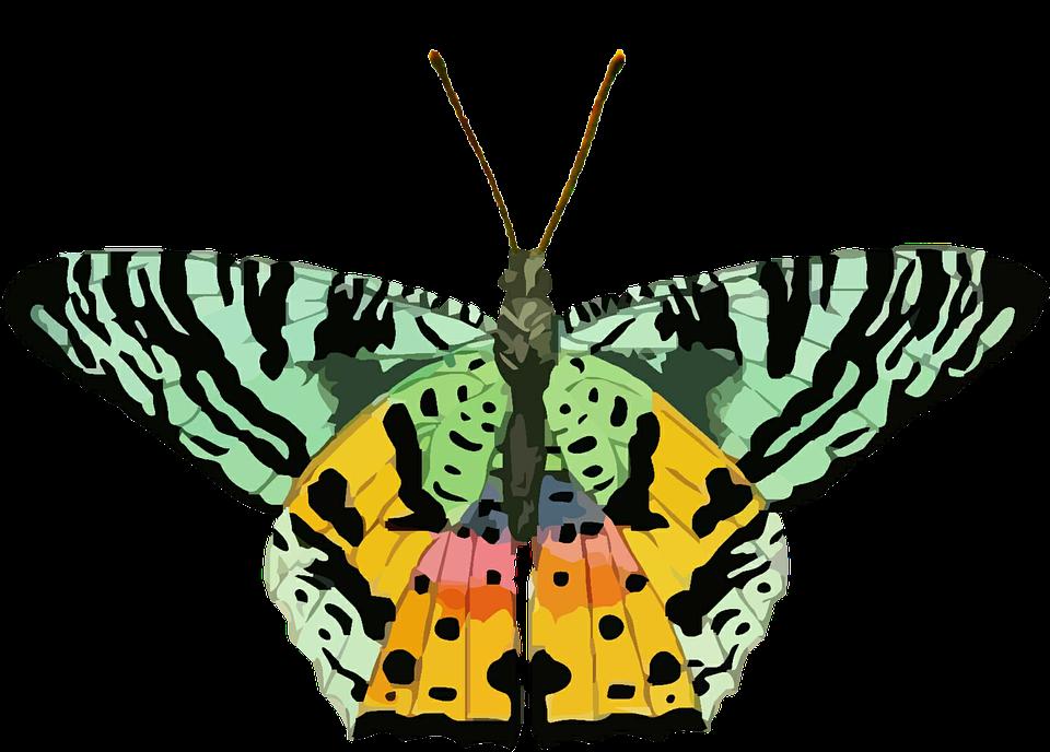 Kostenlose Illustration: Schmetterling, Clipart, Bunte, Grün.