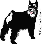 Schnauzer Illustrations and Clipart. 247 Schnauzer royalty free.