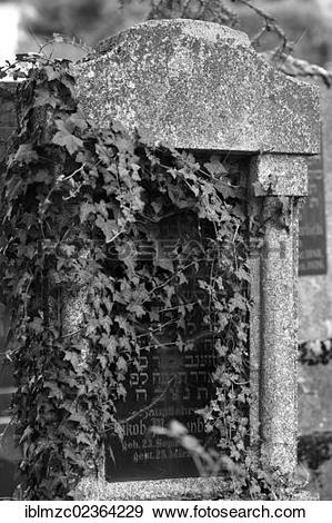 "Stock Photograph of ""Headstone overgrown with ivy at the third."