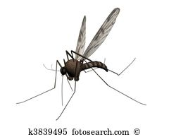 Mosquito Illustrations and Stock Art. 824 mosquito illustration.