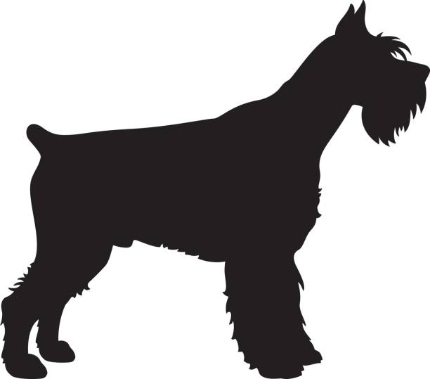 Vector dog silhouette of a Giant Schnauzer dog isolated on.