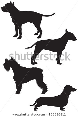 Staffordshire Bull Terrier Stock Images, Royalty.