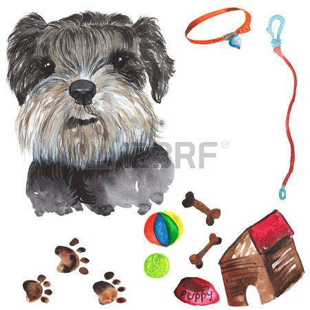 496 Schnauzer Stock Illustrations, Cliparts And Royalty Free.
