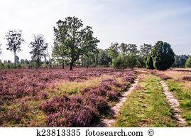 Heathland Stock Photo Images. 1,677 heathland royalty free.