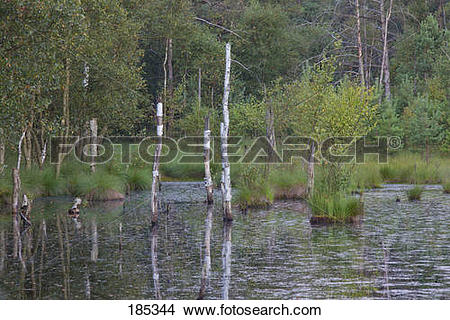 Stock Photo of Pietzmoor, a raised bog near the town.