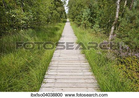 "Stock Photography of ""Boardwalk through the Pietzmoor, Luneburg."