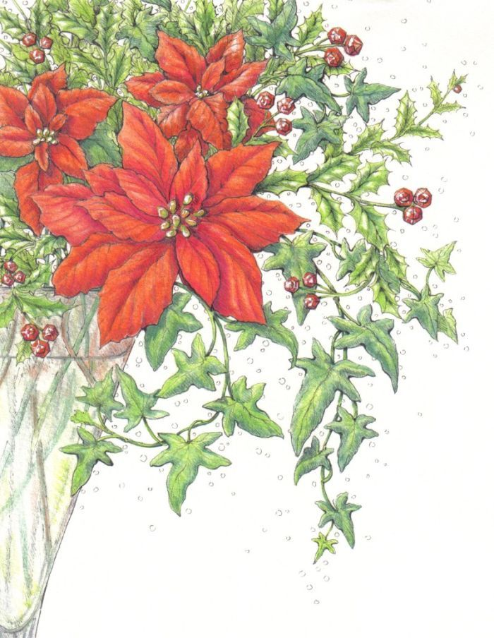 1000+ images about CHRISTMAS POINSETTIA on Pinterest.