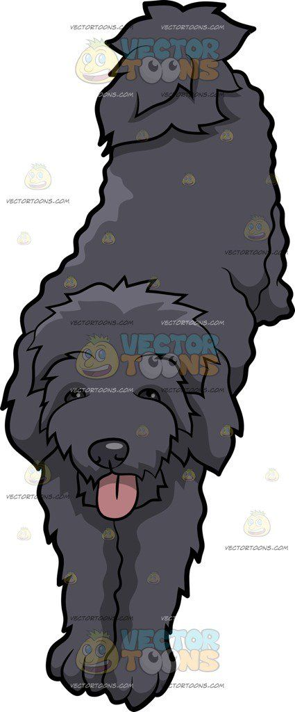 A Schnoodle Dog Stretching Its Body Cartoon Clipart.