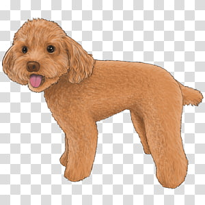 Schnoodle transparent background PNG cliparts free download.