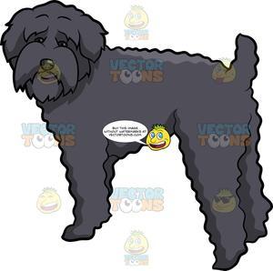 A Sad Schnoodle Dog.